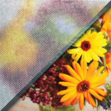 Example of industrex glass over image of flowers, textured privacy glass