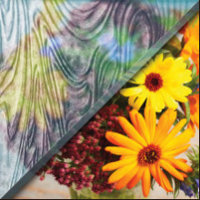 Example of taffeta glass over image of flowers, textured privacy glass