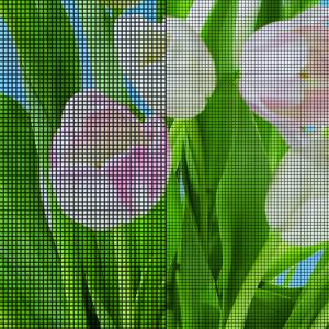 Sample of UtlaVue screen with pink tulips in the background.
